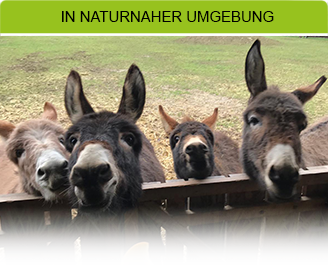 In naturnaher Umgebung